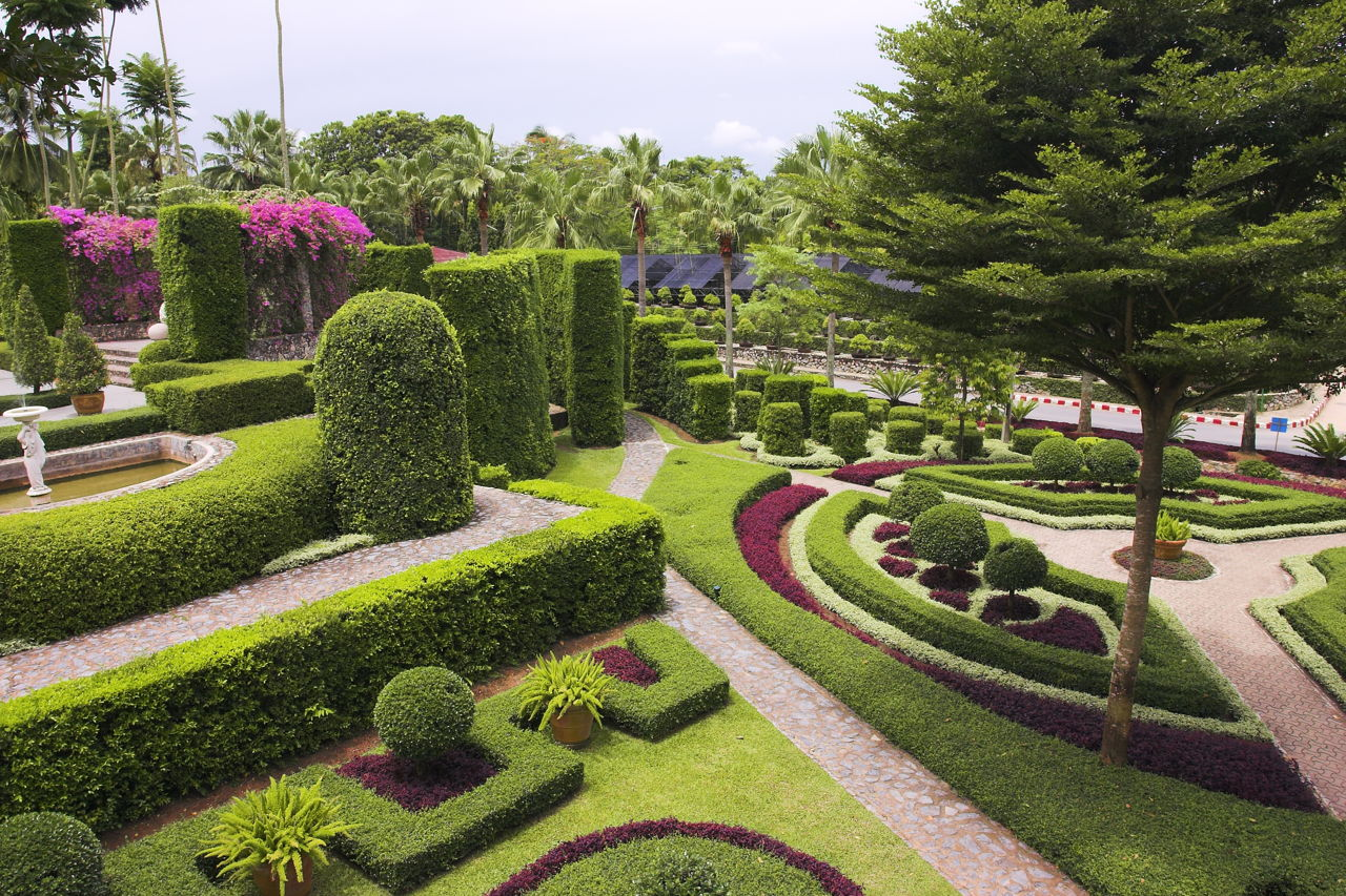 Evergreen Shrubs and Hedges