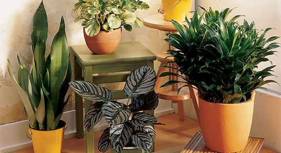 2. Adopt Houseplants: