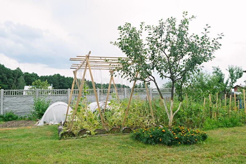 Kitchen garden on the seasonal dacha in the summer. Cultivation of fruits and vegetables on the dacha stock photo