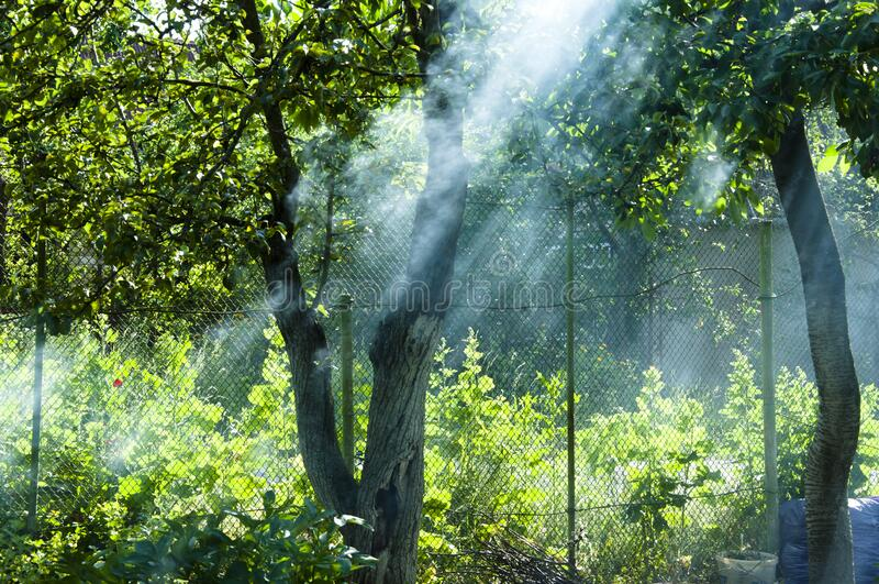 Sun rays in smoke. picnic on vacation and holiday. summer cottage is dacha. Making barbecue in nature near country house. smoke. From fire in garden at fence stock photos