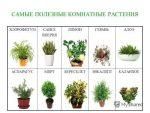 Какие полезны цветы для дома: Самые полезные комнатные растения для дома