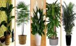 Цветы которые очищают воздух: ТОП-50 Растений Очищающих Воздух | (Фото & Видео) +Отзывы