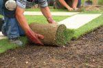 Когда можно сажать рулонный газон: осенью или весной, особенности и правила укладки газонной травы