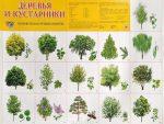 Лиственные деревья подмосковья: Какие бывают виды лиственных деревьев, их фото и названия