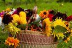 Осінні квіти картинки: Осенние цветы в саду: 65 Фото с названиями