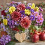 Рисунок осенние цветы: 25 лучших изображений доски «Осень;цветы» в 2020г