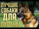 Собака на дачу: Собаки для охраны частного дома