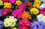 Какие цветы сажать в августе: Какие цветы посадить и посеять в августе