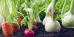 Что зимой можно вырастить на подоконнике в квартире: 6 овощей, которые вы можете вырастить на подоконнике