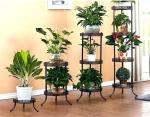 Какие лучше цветы: Самые полезные комнатные растения для дома