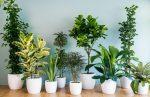 Неприхотливые и красивые комнатные цветы: Самые неприхотливые комнатные цветы с фото цветущих растений для офиса и квартиры